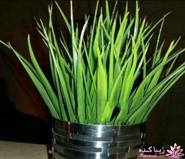 زمان سبزه ذرت ایده ای زیبا برای سبزه ی سفره هفت سین سبزه ی ذرت ذرت_سبزه ...