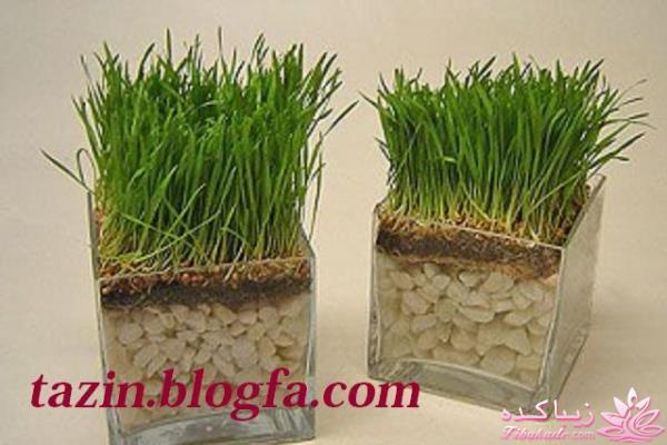 کاشت سبزه با کنجد سبزه عید را خودتان سبز کنید ! ایده برای سبزه عید - زیباکده